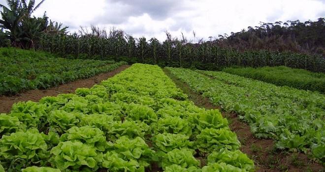 La-agricultura-del-futuro-sera-agroecologica